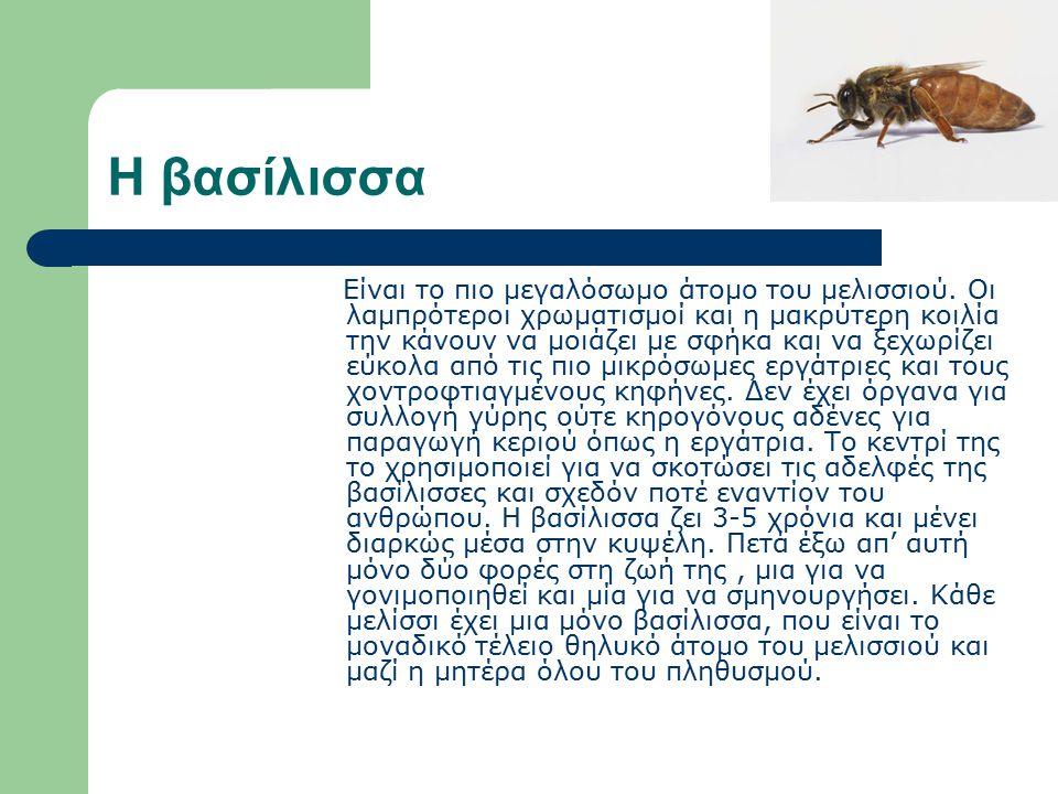 ΒΑΣΙΛΙΚΟΣ ΠΟΛΤΟΣ Τι είναι ο βασιλικός πολτός; Είναι κρεμώδης ουσία που εκκρίνεται από τους υποφαρυγγικούς αδένες των εργατριών μελισσών.