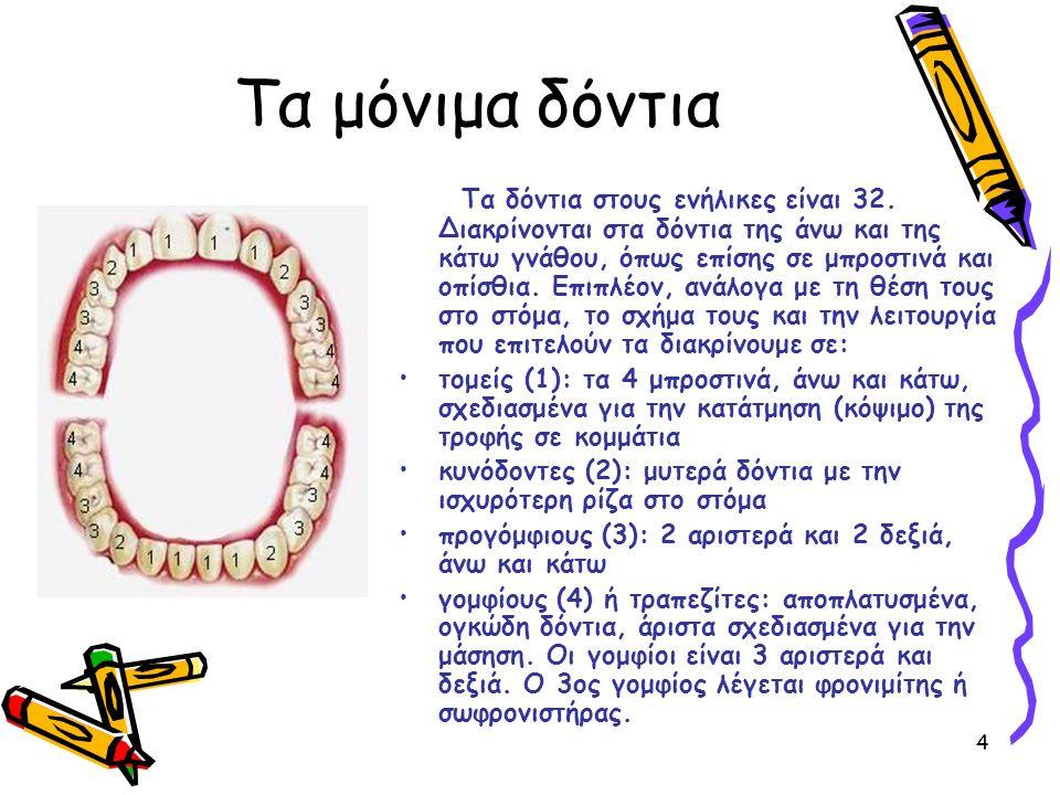 4 Τα μόνιμα δόντια Τα δόντια στους ενήλικες είναι 32. Διακρίνονται στα δόντια της άνω και της κάτω γνάθου, όπως επίσης σε μπροστινά και οπίσθια. Επιπλ
