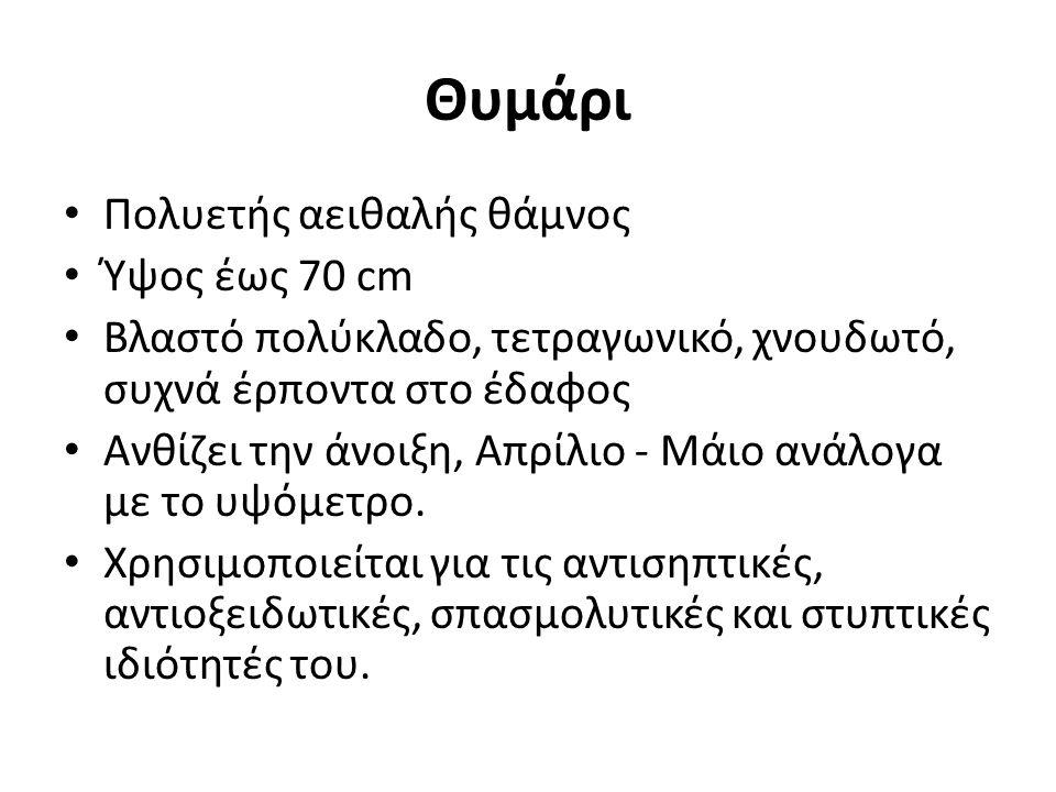 Θυμάρι Πολυετής αειθαλής θάμνος Ύψος έως 70 cm Βλαστό πολύκλαδο, τετραγωνικό, χνουδωτό, συχνά έρποντα στο έδαφος Ανθίζει την άνοιξη, Απρίλιο - Μάιο αν