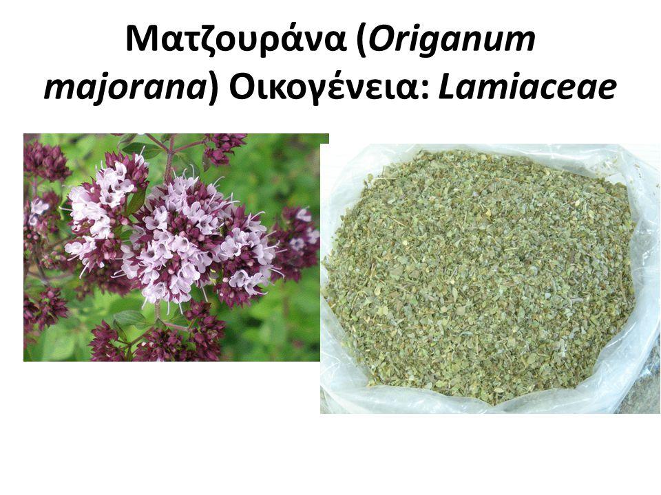 Ματζουράνα Πολυετές φυτό Ήπιο κλίμα (παραθαλάσσιες, νησιωτικές περιοχές) Σε εδάφη γόνιμα που αποστραγγίζονται.
