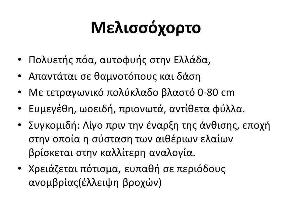 Μελισσόχορτο Πολυετής πόα, αυτοφυής στην Ελλάδα, Απαντάται σε θαμνοτόπους και δάση Με τετραγωνικό πολύκλαδο βλαστό 0-80 cm Ευμεγέθη, ωοειδή, πριονωτά,