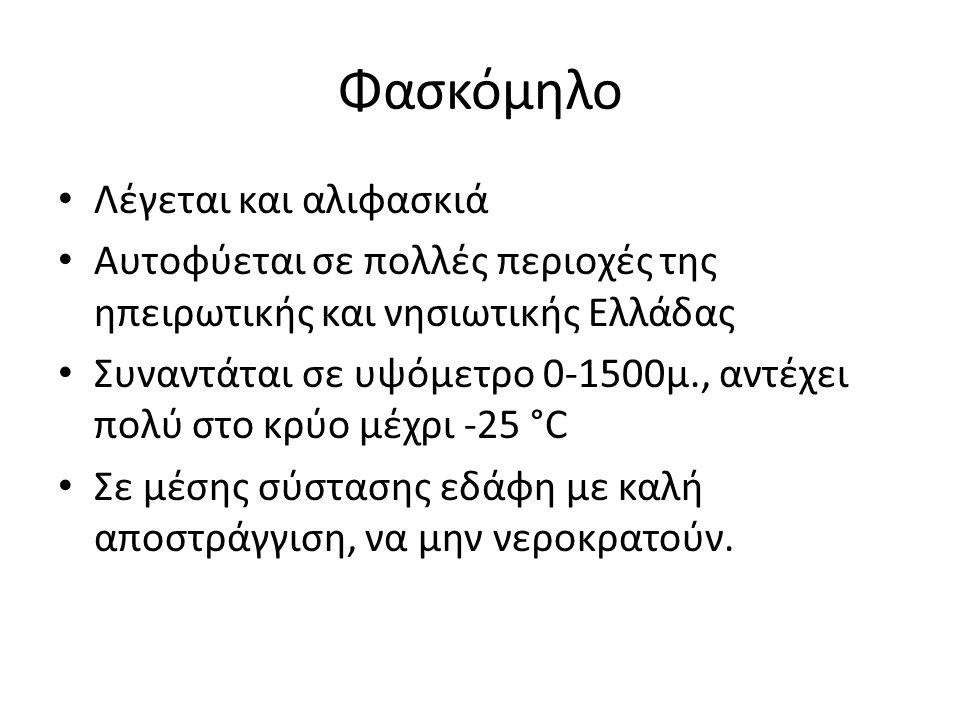 Φασκόμηλο Λέγεται και αλιφασκιά Αυτοφύεται σε πολλές περιοχές της ηπειρωτικής και νησιωτικής Ελλάδας Συναντάται σε υψόμετρο 0-1500μ., αντέχει πολύ στο
