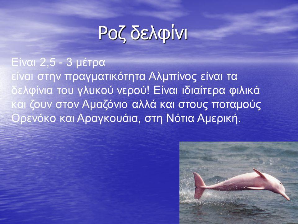 Ροζ δελφίνι Ροζ δελφίνι Είναι 2,5 - 3 μέτρα είναι στην πραγματικότητα Αλμπίνος είναι τα δελφίνια του γλυκού νερού! Είναι ιδιαίτερα φιλικά και ζουν στο