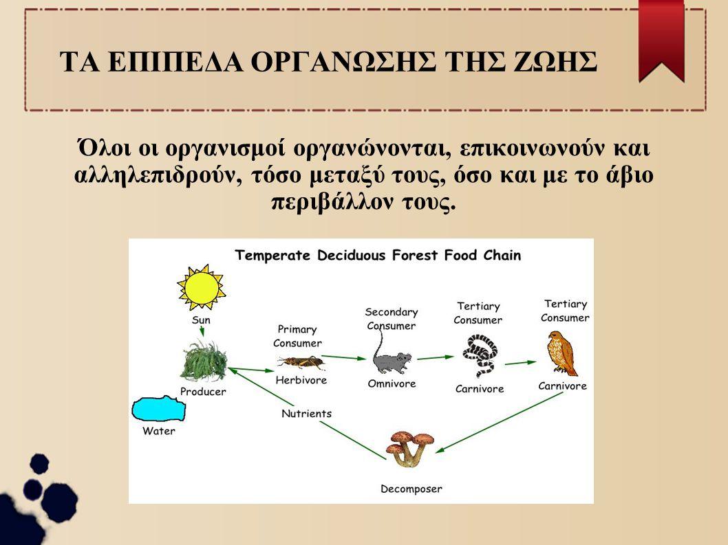 Τα είδη των ζωικών ιστών Καθώς αναπτύσσεται ένας πολυκύτταρος ζωικός οργανισμός, όπως ο άνθρωπος δημιουργούνται σταδιακά πολλά κύτταρα.