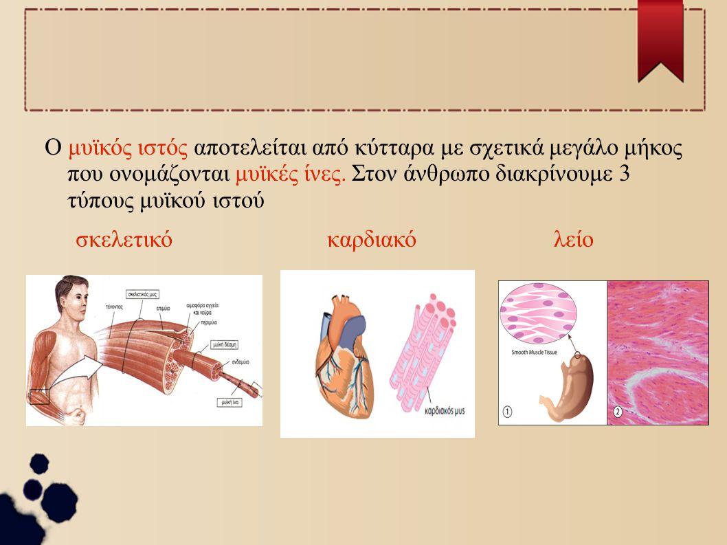 Ο μυϊκός ιστός αποτελείται από κύτταρα με σχετικά μεγάλο μήκος που ονομάζονται μυϊκές ίνες. Στον άνθρωπο διακρίνουμε 3 τύπους μυϊκού ιστού σκελετικόκα