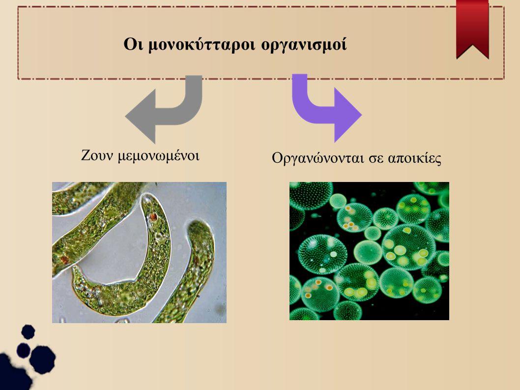 Οι μονοκύτταροι οργανισμοί Ζουν μεμονωμένοι Οργανώνονται σε αποικίες