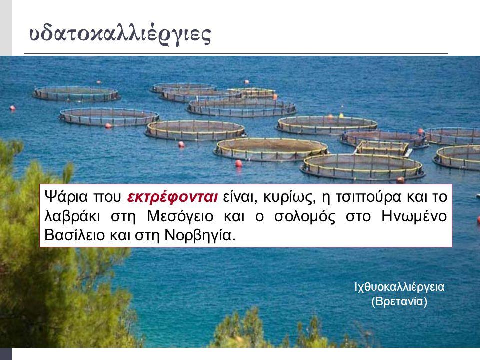 υδατοκαλλιέργιες  Οι μεσογειακές χώρες, πέρα από την αλιεία, έχουν προσανατολιστεί στις υδατοκαλλιέργειες, και η παραγωγή ψαριών και οστρακοειδών στη