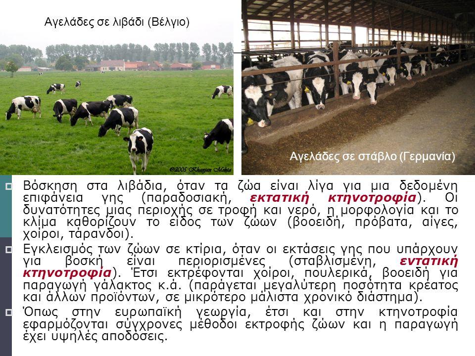 κτηνοτροφία  Βόσκηση στα λιβάδια, όταν τα ζώα είναι λίγα για μια δεδομένη επιφάνεια γης (παραδοσιακή, εκτατική κτηνοτροφία). Οι δυνατότητες μιας περι