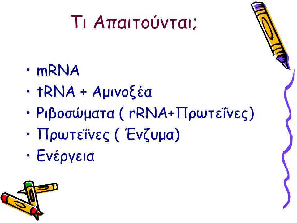 Τι Απαιτούνται; mRNA tRNA + Αμινοξέα Ριβοσώματα ( rRNA+Πρωτεΐνες) Πρωτεΐνες ( Ένζυμα) Ενέργεια