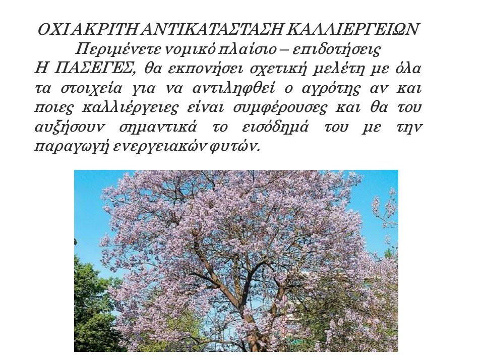 OXI AKPITH ANTIKATAΣTAΣH KAΛΛIEPΓEIΩN Περιμένετε νομικό πλαίσιο – επιδοτήσεις H ΠAΣEΓEΣ, θα εκπονήσει σχετική μελέτη με όλα τα στοιχεία για να αντιληφθεί ο αγρότης αν και ποιες καλλιέργειες είναι συμφέρουσες και θα του αυξήσουν σημαντικά το εισόδημά του με την παραγωγή ενεργειακών φυτών.