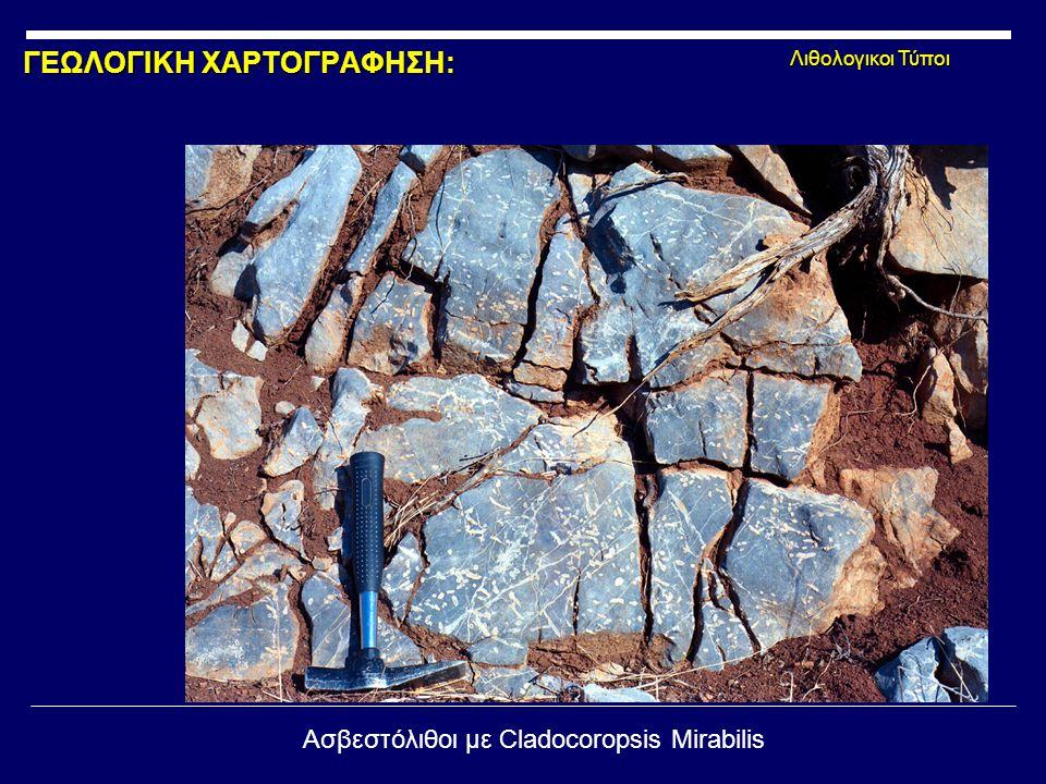 ΓΕΩΛΟΓΙΚΗ ΧΑΡΤΟΓΡΑΦΗΣΗ: Λιθολογικοι Τύποι Ασβεστόλιθοι με Cladocoropsis Mirabilis