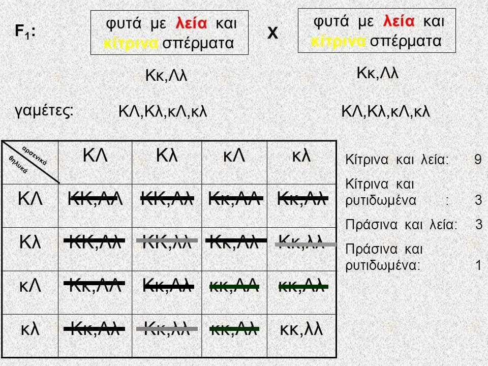 Ας μελετήσουμε λοιπόν την κληρονομικότητα δυο χαρακτήρων: σχήμα σπέρματος : λείο (Λ) ή ρυτιδωμένο (λ) χρώμα σπέρματος: κίτρινο (Κ) ή πράσινο (κ) Αμιγή