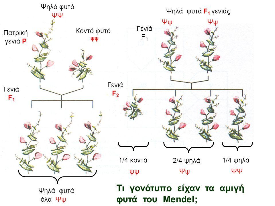 Τα πειράματα του Mendel ύψος φυτού σχήμα σπέρματος χρώμα καρπού χρώμα άνθους Κληρονομικός χαρακτήραςΚληρονομικοί παράγοντες ψηλό-κοντό λείο-ρυτιδωμένο
