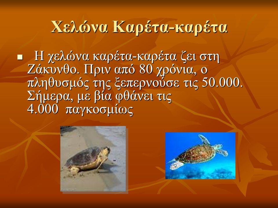 Χελώνα Καρέτα-καρέτα Η χελώνα καρέτα-καρέτα ζει στη Ζάκυνθο. Πριν από 80 χρόνια, ο πληθυσμός της ξεπερνούσε τις 50.000. Σήμερα, με βία φθάνει τις 4.00