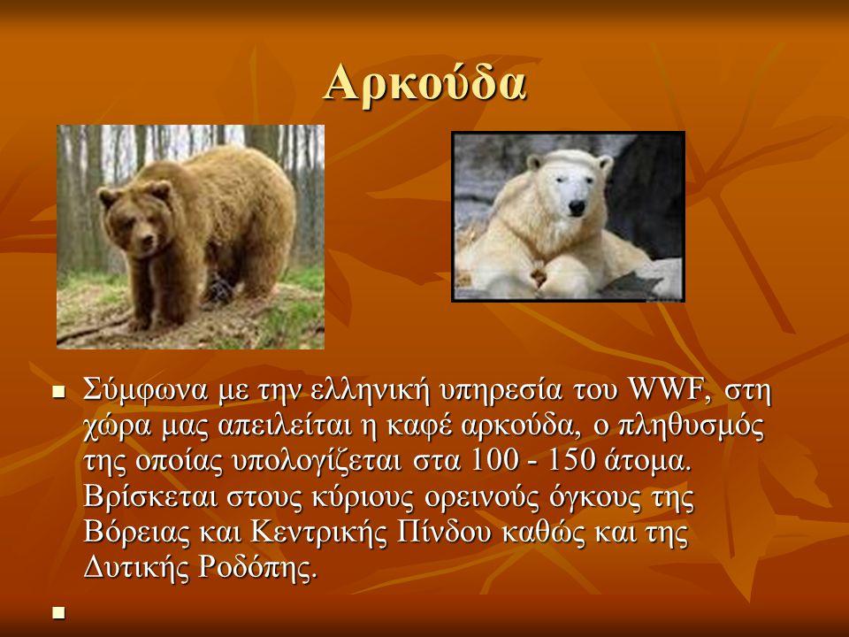 Αρκούδα Σύμφωνα με την ελληνική υπηρεσία του WWF, στη χώρα μας απειλείται η καφέ αρκούδα, ο πληθυσμός της οποίας υπολογίζεται στα 100 - 150 άτομα. Βρί