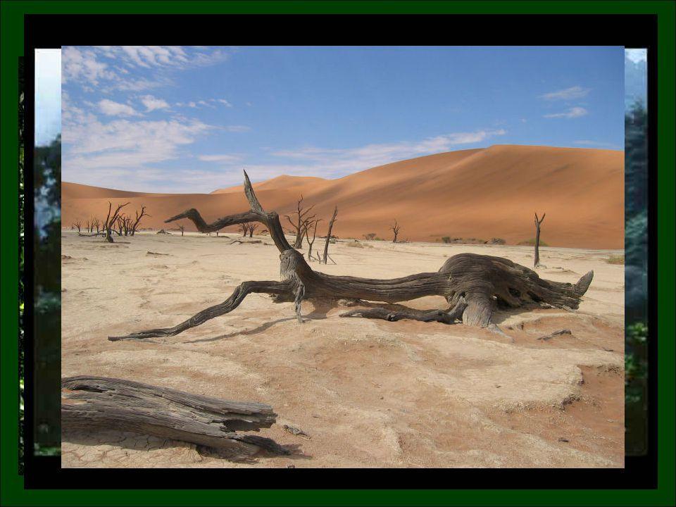 …αχανείς ερήμους όπου η μέση ετήσια θερμοκρασία φτάνει τους 45 ο -55 ο C… …τεράστιες σαβάνες που φιλοξενούν τους μεγαλύτερους πληθυσμούς μεγάλων θηλαστικών… …κωνοφόρα δάση πράσινα από τα πεύκα, τα έλατα και τους κέδρους… …έχει καταπράσινα τροπικά δάση, υγρά και ομιχλώδη από τις πολλές βροχές όλο το χρόνο…