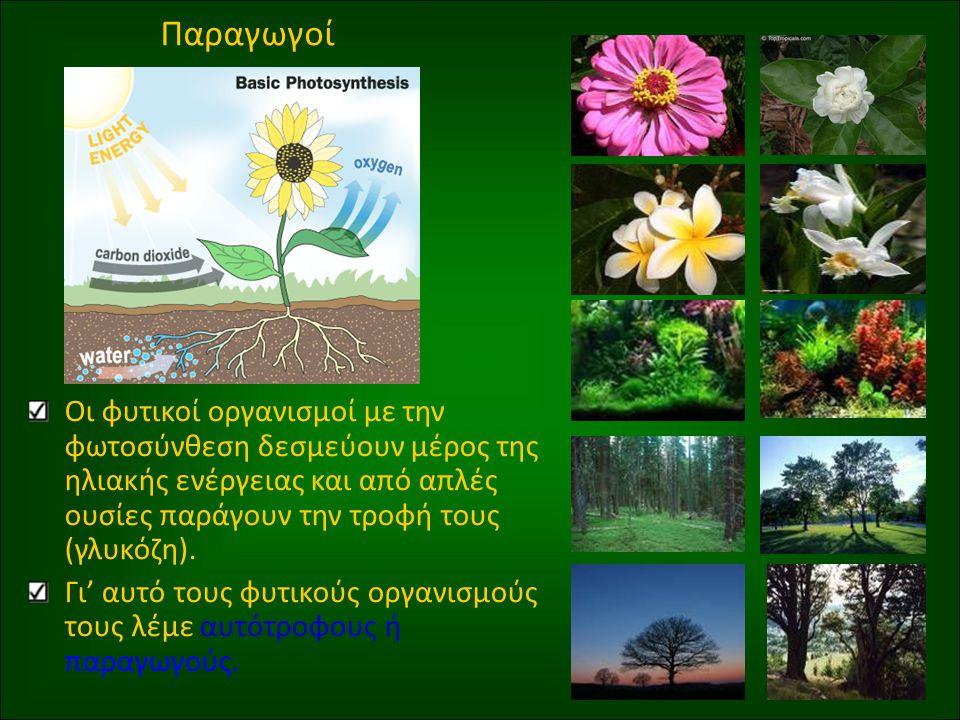Παραγωγοί Οι φυτικοί οργανισμοί με την φωτοσύνθεση δεσμεύουν μέρος της ηλιακής ενέργειας και από απλές ουσίες παράγουν την τροφή τους (γλυκόζη).