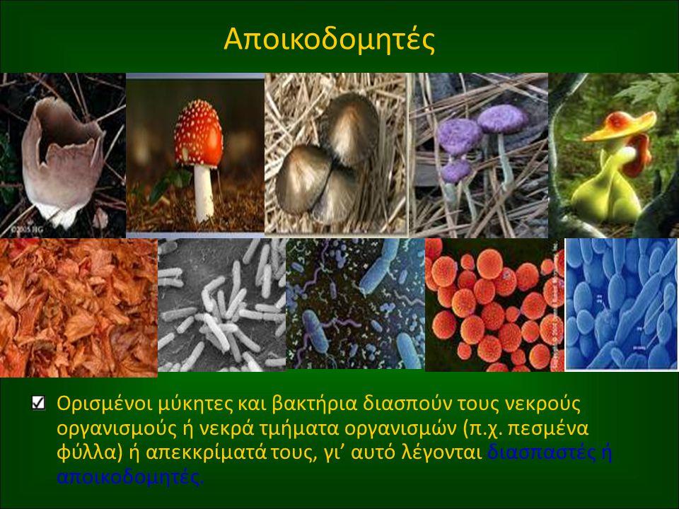 Αποικοδομητές Ορισμένοι μύκητες και βακτήρια διασπούν τους νεκρούς οργανισμούς ή νεκρά τμήματα οργανισμών (π.χ.