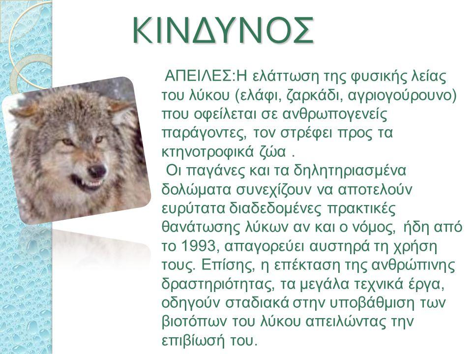 ΤΟ ΗΞΕΡΕΣ ΟΤΙ … ΤΟ ΗΞΕΡΕΣ ΟΤΙ … Ο πρώτος πρόγονος του λύκου εμφανίστηκε πριν από 54 εκ. χρόνια στη Β. Αμερική ενώ πήρε τη σημερινή του μορφή πριν 1,5