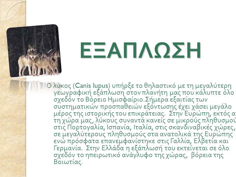 ΕΞΑΠΛΩΣΗ ΕΞΑΠΛΩΣΗ Ο λύκος (Canis lupus) υπήρξε το θηλαστικό με τη μεγαλύτερη γεωγραφική εξάπλωση στον πλανήτη μας που κάλυπτε όλο σχεδόν το Βόρειο Ημισφαίριο.