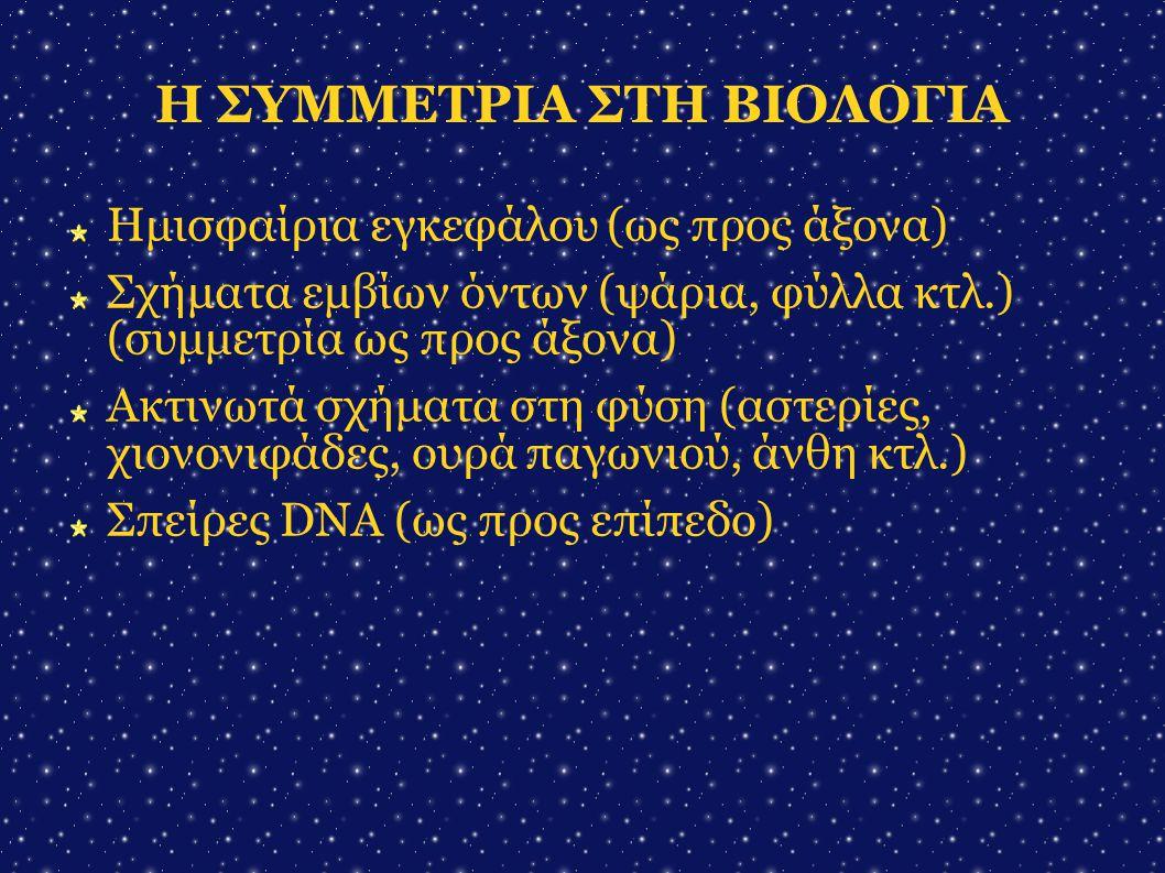 Η ΣΥΜΜΕΤΡΙΑ ΣΤΗ ΒΙΟΛΟΓΙΑ Ημισφαίρια εγκεφάλου (ως προς άξονα)  Σχήματα εμβίων όντων (ψάρια, φύλλα κτλ.) (συμμετρία ως προς άξονα)  Ακτινωτά σχήματα