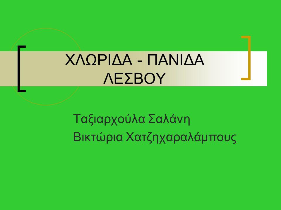 ΧΛΩΡΙΔΑ - ΠΑΝΙΔΑ ΛΕΣΒΟΥ Ταξιαρχούλα Σαλάνη Βικτώρια Χατζηχαραλάμπους