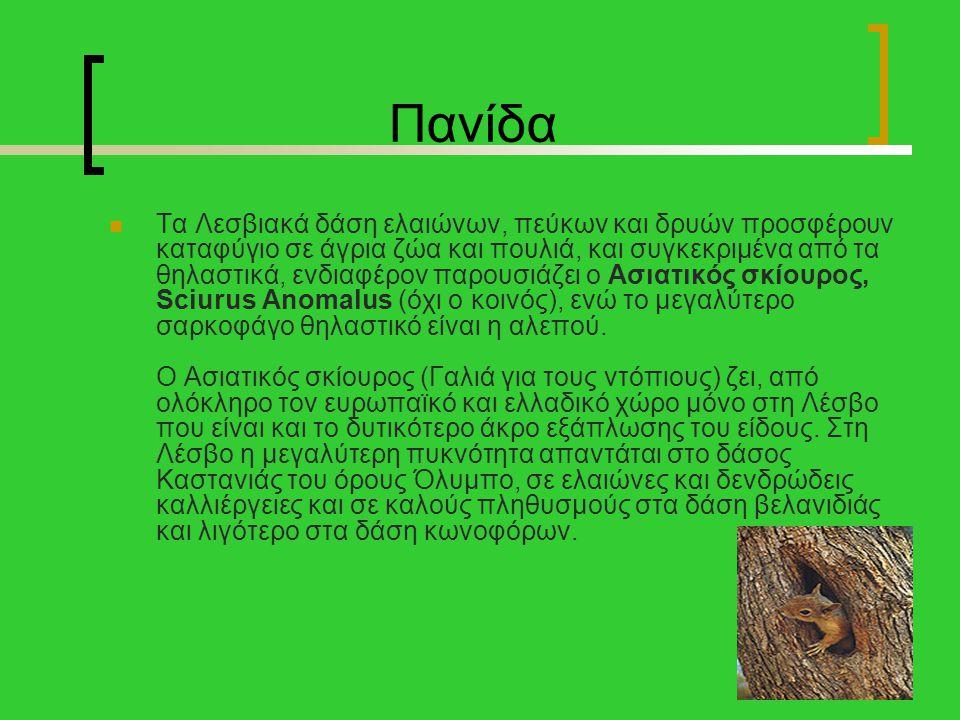 Πανίδα Τα Λεσβιακά δάση ελαιώνων, πεύκων και δρυών προσφέρουν καταφύγιο σε άγρια ζώα και πουλιά, και συγκεκριμένα από τα θηλαστικά, ενδιαφέρον παρουσι