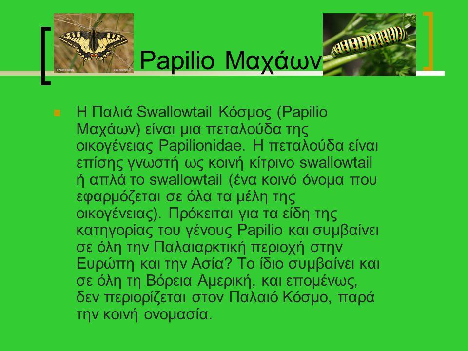 Papilio Μαχάων Η Παλιά Swallowtail Κόσμος (Papilio Μαχάων) είναι μια πεταλούδα της οικογένειας Papilionidae. Η πεταλούδα είναι επίσης γνωστή ως κοινή