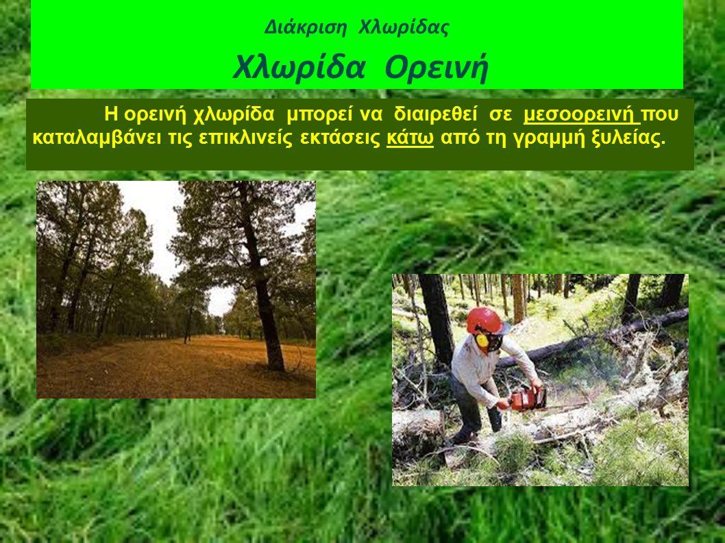 Διάκριση Χλωρίδας Χλωρίδα Ορεινή Η ορεινή χλωρίδα μπορεί να διαιρεθεί σε μεσοορεινή που καταλαμβάνει τις επικλινείς εκτάσεις κάτω από τη γραμμή ξυλεία