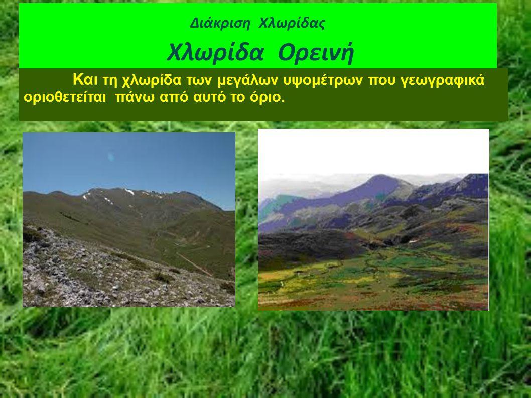 Διάκριση Χλωρίδας Χλωρίδα Ορεινή Και τη χλωρίδα των μεγάλων υψομέτρων που γεωγραφικά οριοθετείται πάνω από αυτό το όριο.