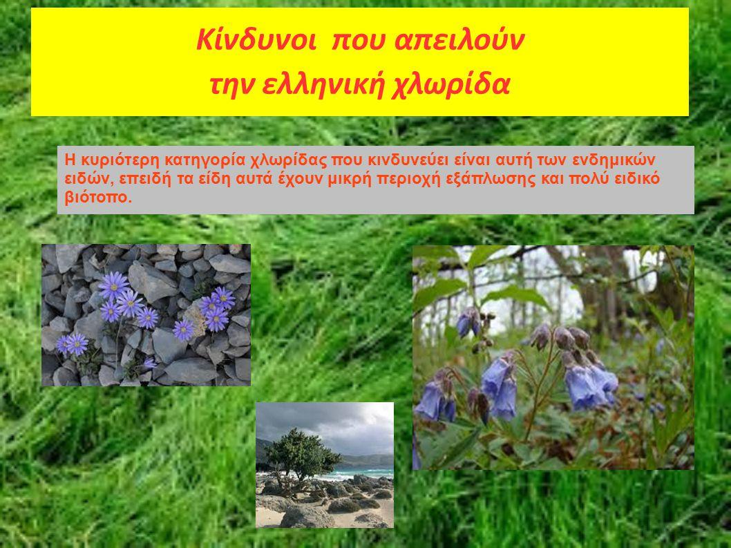 Κίνδυνοι που απειλούν την ελληνική χλωρίδα Η κυριότερη κατηγορία χλωρίδας που κινδυνεύει είναι αυτή των ενδημικών ειδών, επειδή τα είδη αυτά έχουν μικ