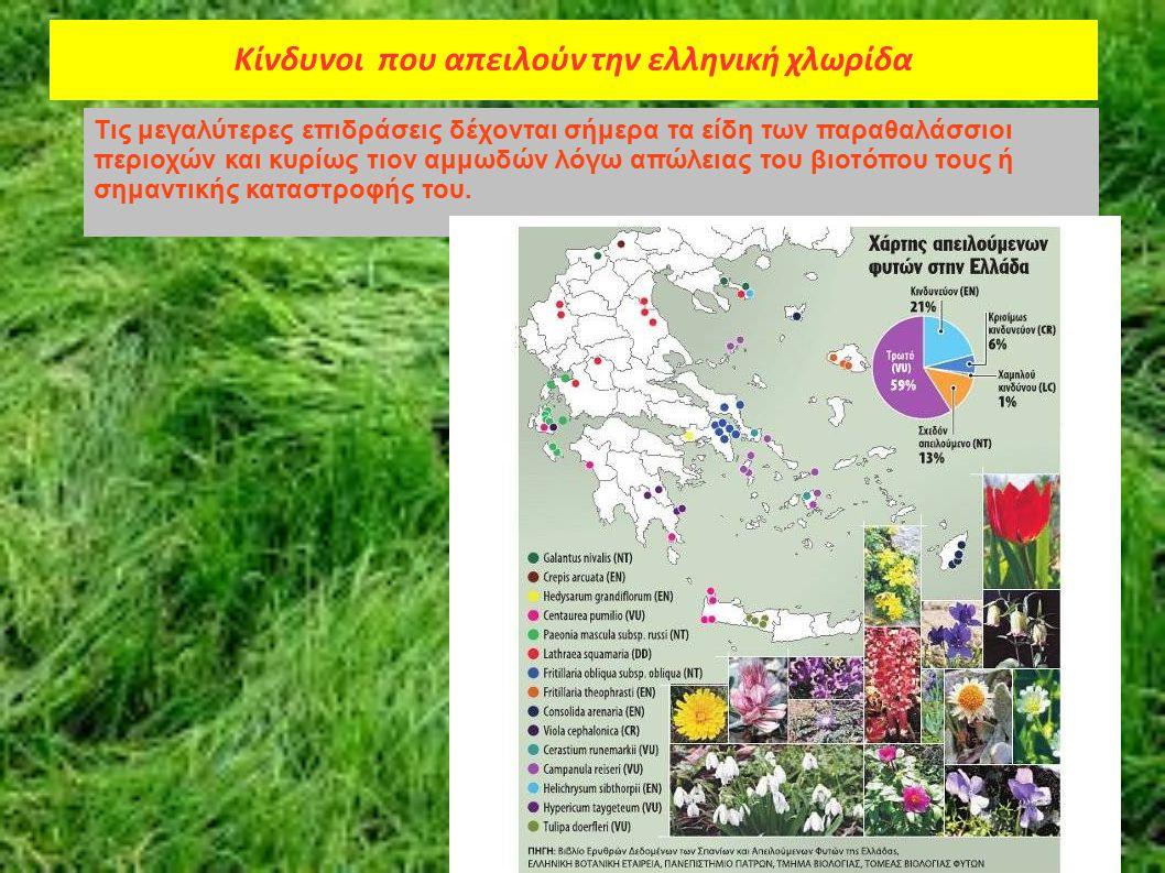 Κίνδυνοι που απειλούν την ελληνική χλωρίδα Τις μεγαλύτερες επιδράσεις δέχονται σήμερα τα είδη των παραθαλάσσιοι περιοχών και κυρίως τιον αμμωδών λόγω