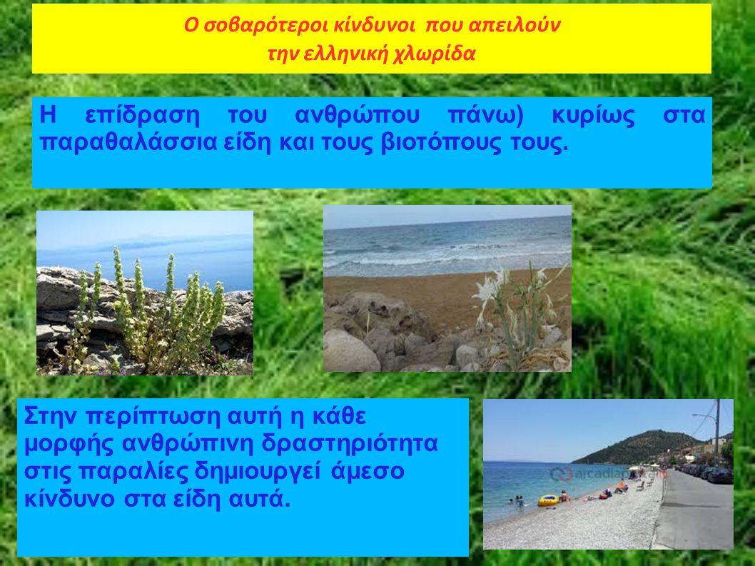 Ο σοβαρότεροι κίνδυνοι που απειλούν την ελληνική χλωρίδα Η επίδραση του ανθρώπου πάνω) κυρίως στα παραθαλάσσια είδη και τους βιοτόπους τους. Στην περί