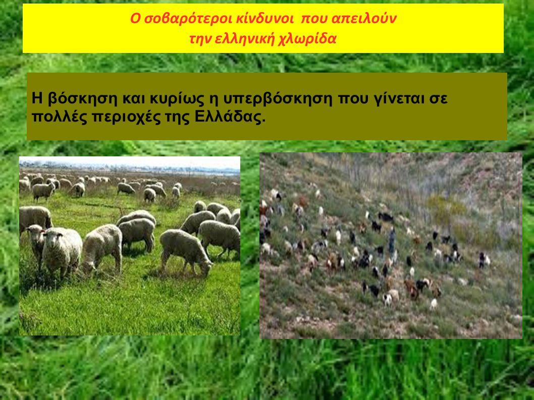 Η βόσκηση και κυρίως η υπερβόσκηση που γίνεται σε πολλές περιοχές της Ελλάδας. Ο σοβαρότεροι κίνδυνοι που απειλούν την ελληνική χλωρίδα