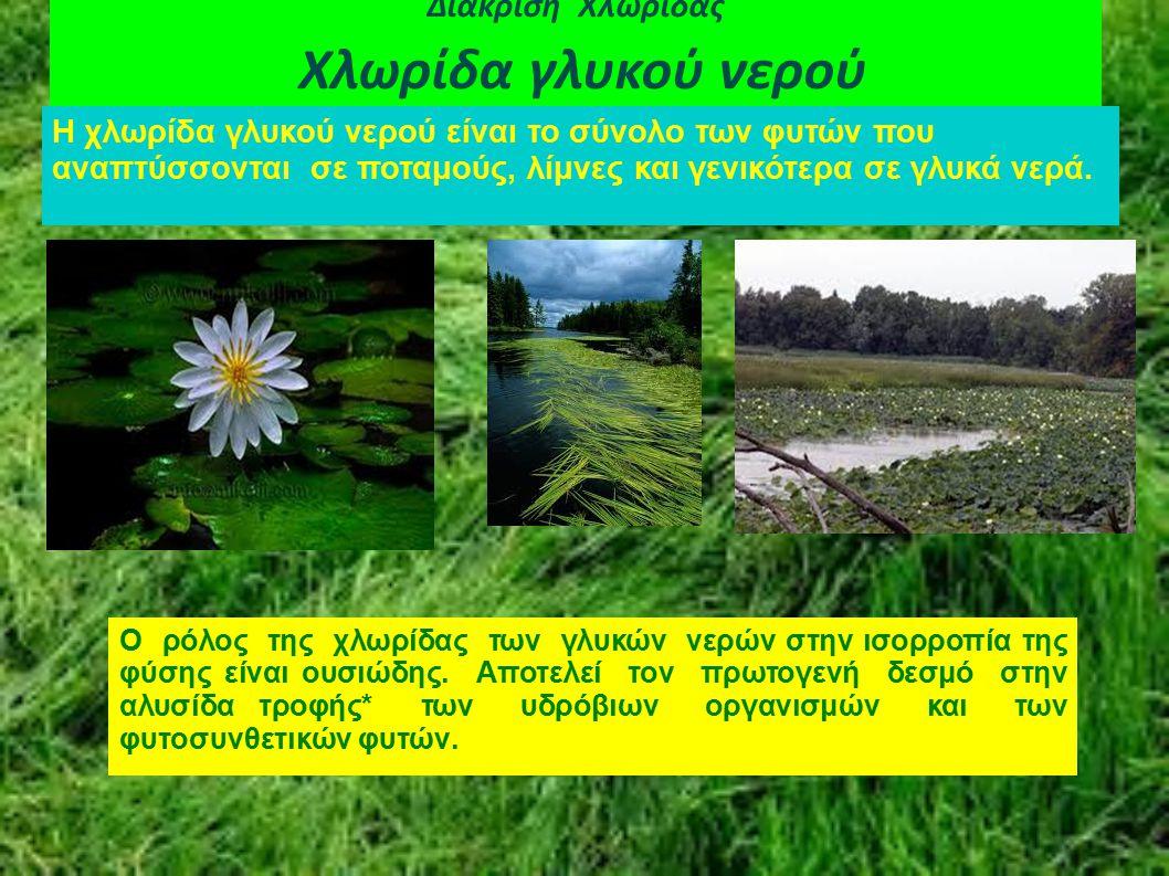 Διάκριση Χλωρίδας Χλωρίδα γλυκού νερού Η χλωρίδα γλυκού νερού είναι το σύνολο των φυτών που αναπτύσσονται σε ποταμούς, λίμνες και γενικότερα σε γλυκά