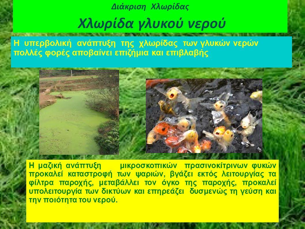 Διάκριση Χλωρίδας Χλωρίδα γλυκού νερού Η υπερβολική ανάπτυξη της χλωρίδας των γλυκών νερών πολλές φορές αποβαίνει επιζήμια και επιβλαβής Η μαζική ανάπ