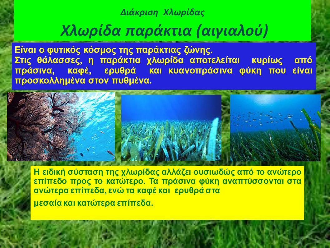 Διάκριση Χλωρίδας Χλωρίδα παράκτια (αιγιαλού) Είναι ο φυτικός κόσμος της παράκτιας ζώνης. Στις θάλασσες, η παράκτια χλωρίδα αποτελείται κυρίως από πρά