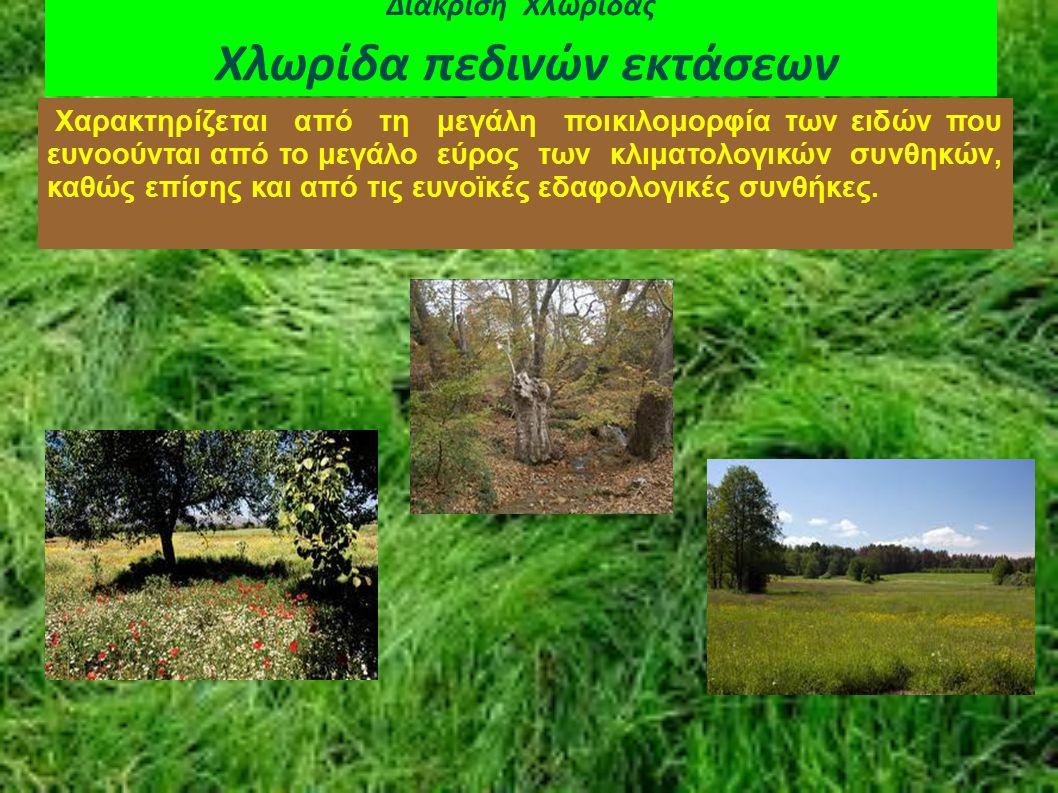 Διάκριση Χλωρίδας Χλωρίδα πεδινών εκτάσεων Χαρακτηρίζεται από τη μεγάλη ποικιλομορφία των ειδών που ευνοούνται από το μεγάλο εύρος των κλιματολογικών
