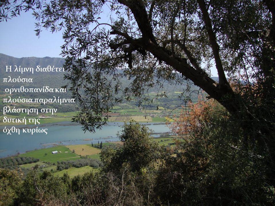 Η λίμνη διαθέτει πλούσια ορνιθοπανίδα και πλούσια παραλίμνια βλάστηση στην δυτική της όχθη κυρίως