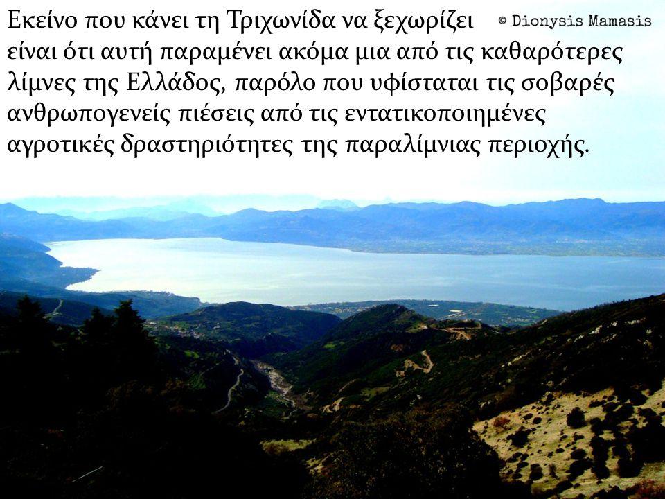 Εκείνο που κάνει τη Τριχωνίδα να ξεχωρίζει είναι ότι αυτή παραμένει ακόμα μια από τις καθαρότερες λίμνες της Ελλάδος, παρόλο που υφίσταται τις σοβαρές ανθρωπογενείς πιέσεις από τις εντατικοποιημένες αγροτικές δραστηριότητες της παραλίμνιας περιοχής.