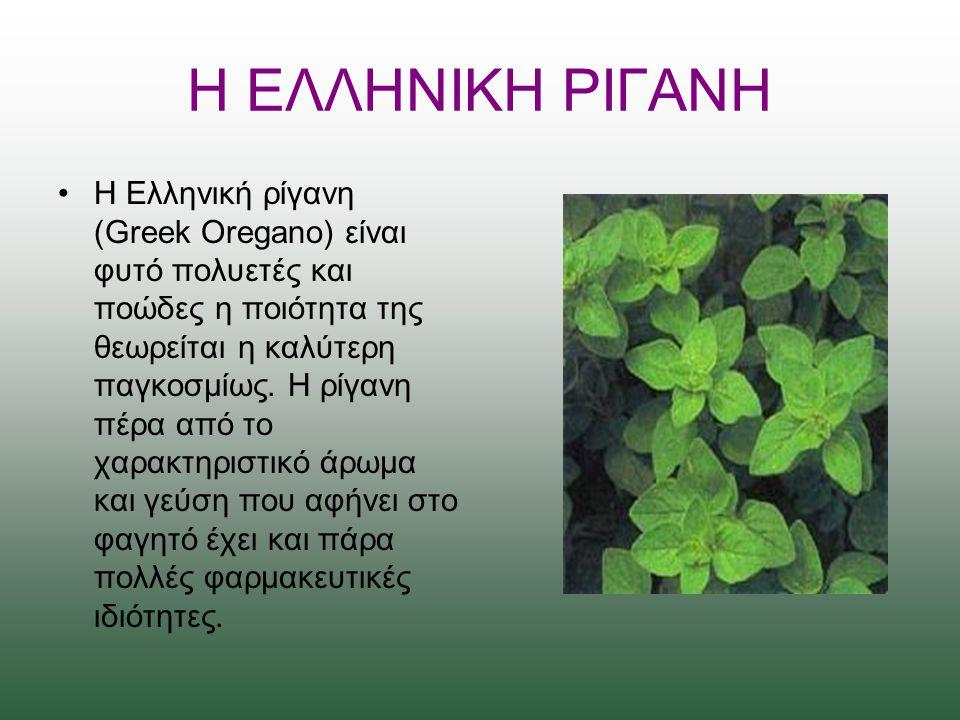 Η ΕΛΛΗΝΙΚΗ ΡΙΓΑΝΗ Η Ελληνική ρίγανη (Greek Oregano) είναι φυτό πολυετές και ποώδες η ποιότητα της θεωρείται η καλύτερη παγκοσμίως.