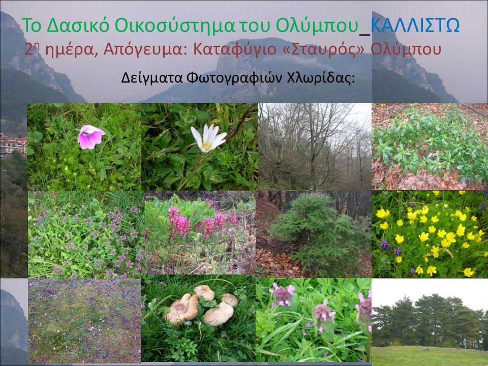 Επίσκεψη σε χώρους αρχαιολογικού και παραδοσιακού ενδιαφέροντος Πεζοπορία σε μονοπάτι α του Ολύμπου Φωτογράφηση της χλωρίδας διαφόρων περιοχών Συλλογή δειγμάτων φυτών για φυτολόγιο Λήψη φωτογραφιών και Video Συμπλήρωση φύλλων Εργασίας Συνέντευξη από τους Δασολόγους του Φορέα Διαχείρισης του Εθνικού Δρυμού Ολύμπου Το Δασικό Οικοσύστημα του Ολύμπου_ΚΑΛΛΙΣΤΩ Δραστηριότητες των μαθητών κατά τη διάρκεια της περιβαλλοντικής επίσκεψης:
