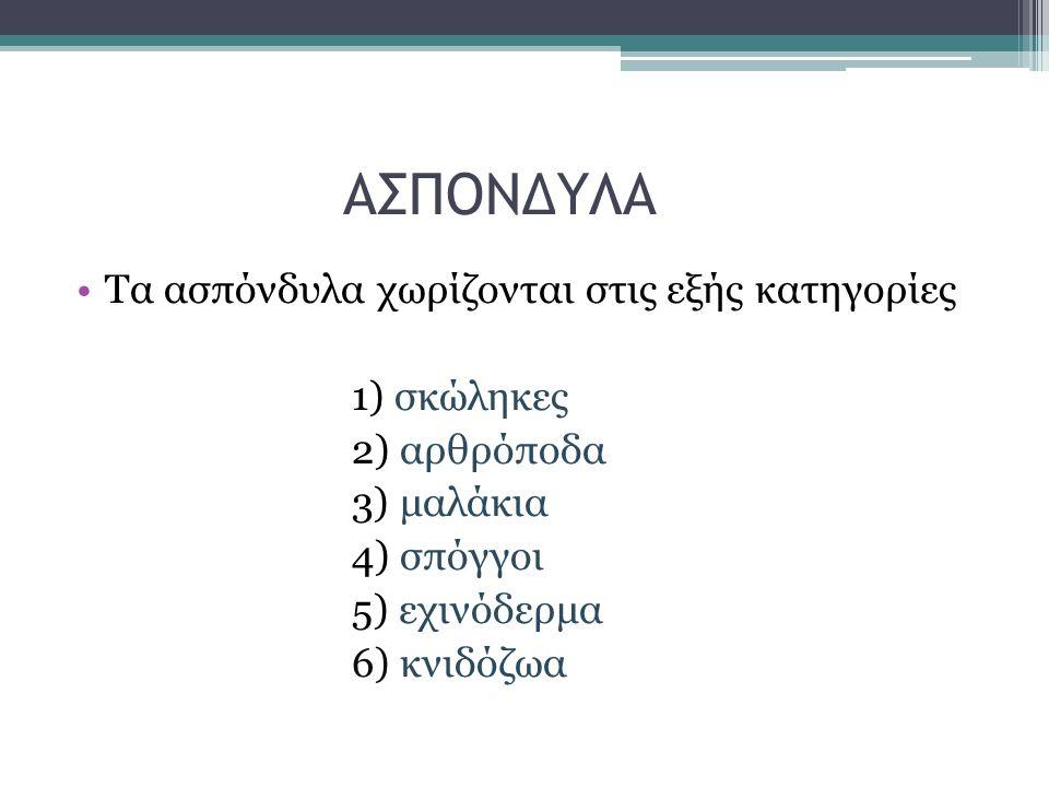 ΑΣΠΟΝΔΥΛΑ Τα ασπόνδυλα χωρίζονται στις εξής κατηγορίες 1) σκώληκες 2) αρθρόποδα 3) μαλάκια 4) σπόγγοι 5) εχινόδερμα 6) κνιδόζωα