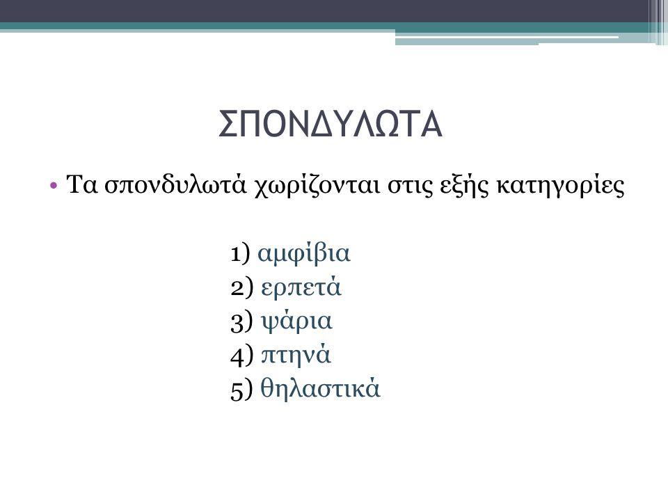 ΣΠΟΝΔΥΛΩΤΑ Τα σπονδυλωτά χωρίζονται στις εξής κατηγορίες 1) αμφίβια 2) ερπετά 3) ψάρια 4) πτηνά 5) θηλαστικά