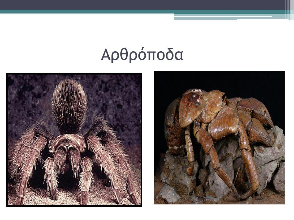 ΜΑΛΑΚΙΑ Είναι ζώα που έχουν πολύ μαλακό σώμα. Ζουν στην ξηρά αλλά και στη θάλασσα.