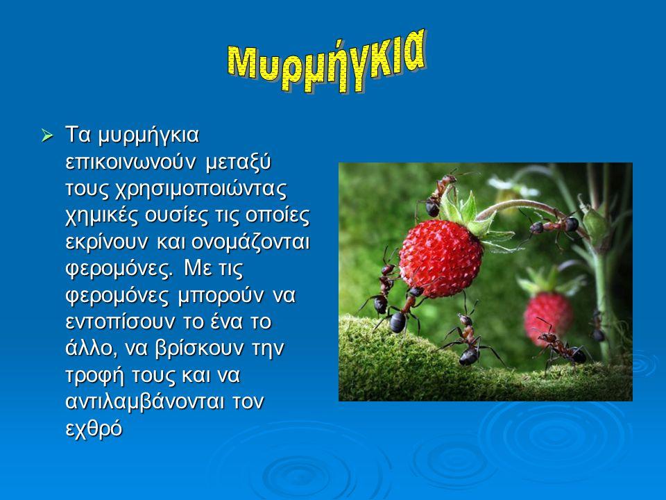 ΤΤΤΤα μυρμήγκια επικοινωνούν μεταξύ τους χρησιμοποιώντας χημικές ουσίες τις οποίες εκρίνουν και ονομάζονται φερομόνες. Με τις φερομόνες μπορούν να