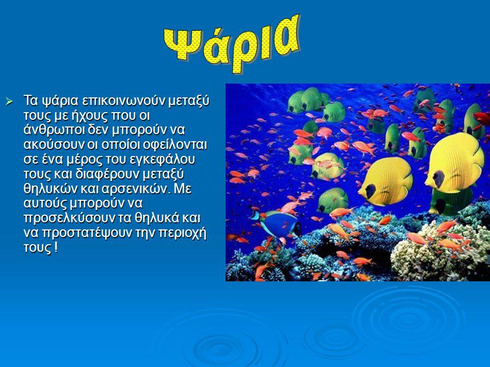 ΤΤΤΤα ψάρια επικοινωνούν μεταξύ τους με ήχους που οι άνθρωποι δεν μπορούν να ακούσουν οι οποίοι οφείλονται σε ένα μέρος του εγκεφάλου τους και δια