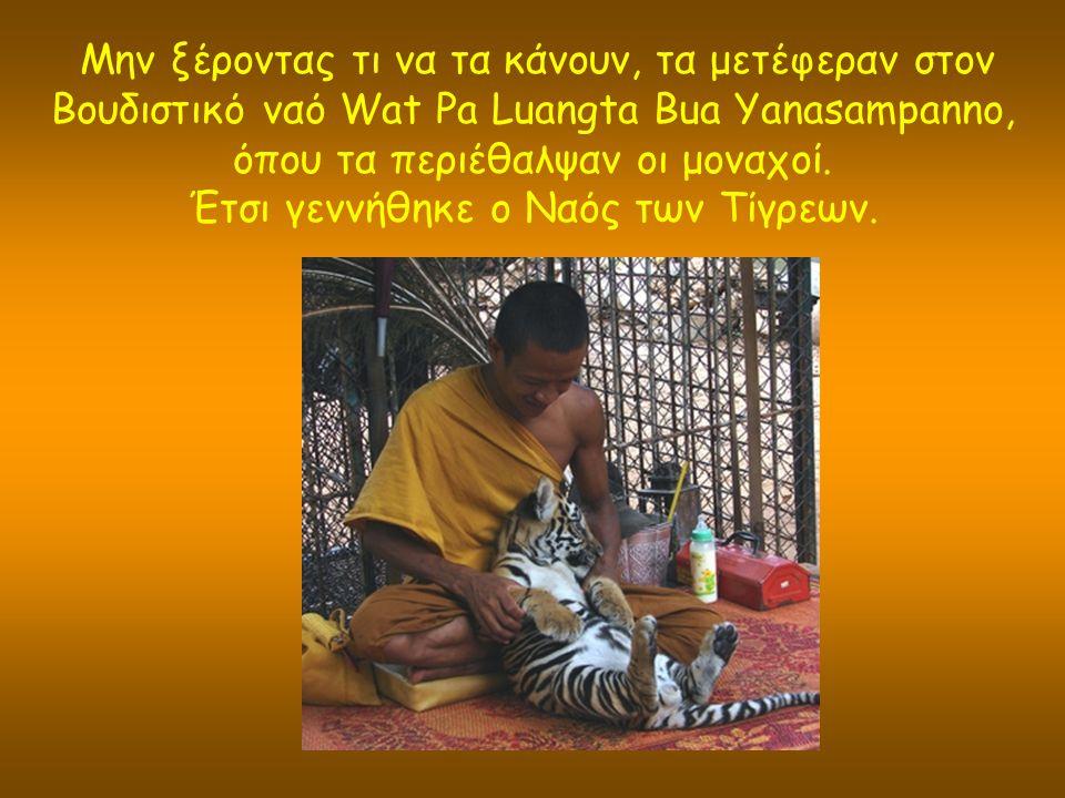 Μην ξέροντας τι να τα κάνουν, τα μετέφεραν στον Βουδιστικό ναό Wat Pa Luangta Bua Yanasampanno, όπου τα περιέθαλψαν οι μοναχοί.