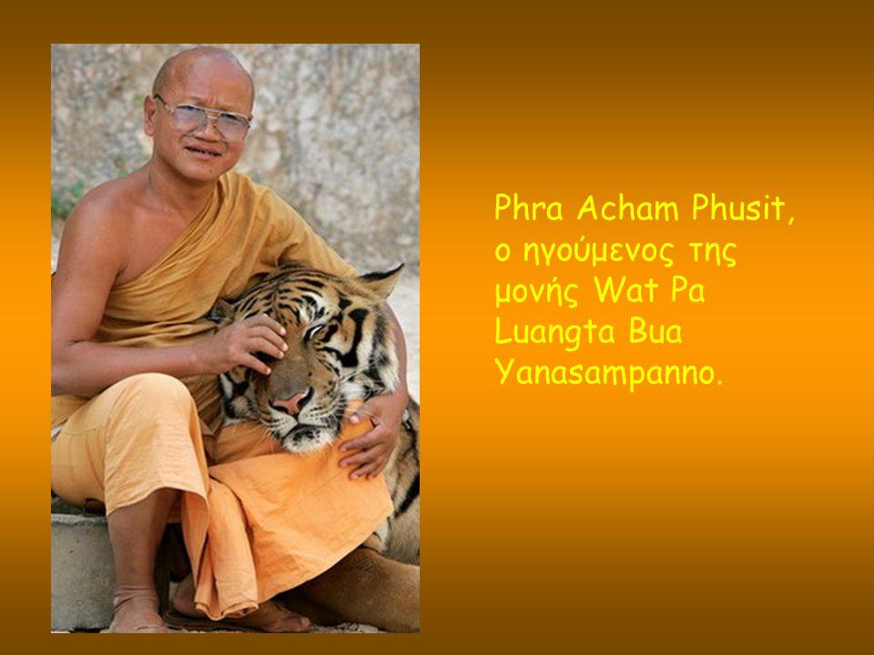 Phra Acham Phusit, ο ηγούμενος της μονής Wat Pa Luangta Bua Yanasampanno.
