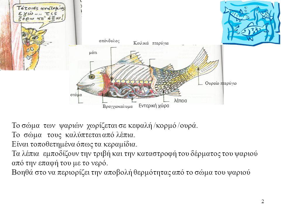 2 Το σώμα των ψαριών χωρίζεται σε κεφαλή /κορμό /ουρά. Το σώμα τους καλύπτεται από λέπια. Είναι τοποθετημένα όπως τα κεραμίδια. Τα λέπια εμποδίζουν τη